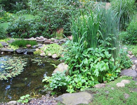 Landscape design photo gallery natural landscaping and for Bog filter design