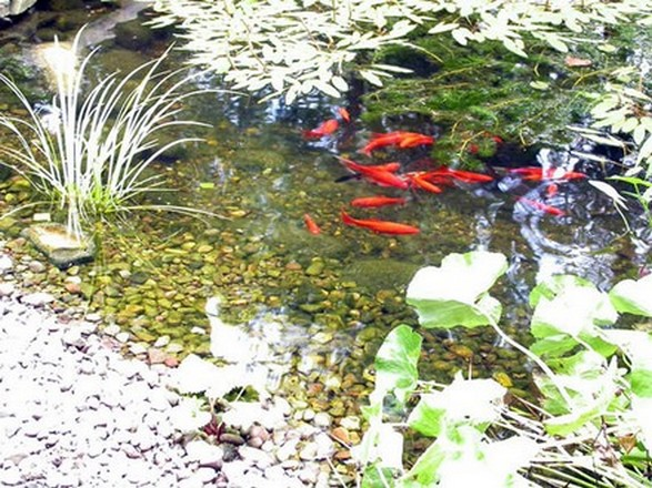 Natural Garden Pond Maintenance : Natural Pond Care  Natural Landscaping, Gardening, and Landscape