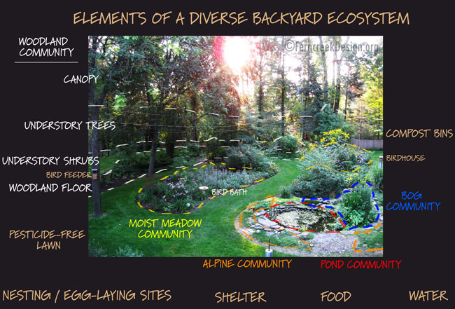 The Backyard Ecosystem Natural Landscaping Gardening and