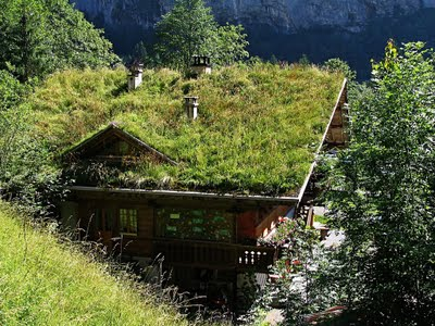 Green Roofs Natural Landscaping Gardening And