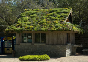 If You Are Interested, But Not Quite Sold On Greenroofing Your House,  Consider Adding A Simple Green Roof To Your Shed .