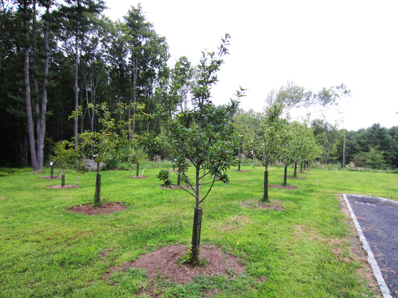 backyard orchard design submited images