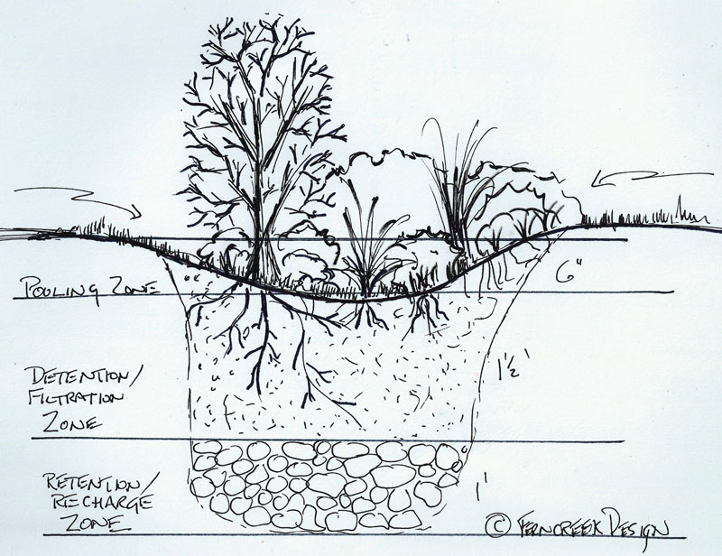 The Rain Garden Natural Landscaping Gardening And