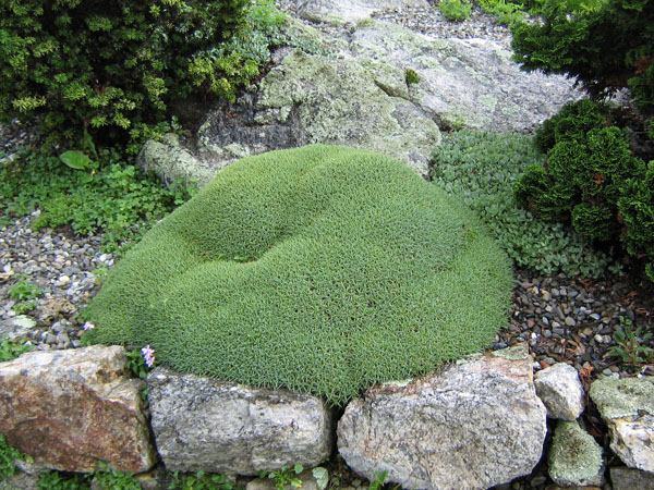 The Rock Garden Natural Landscaping Gardening and Landscape – Plants for a Rock Garden