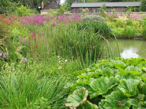 Image result for wetland landscaping
