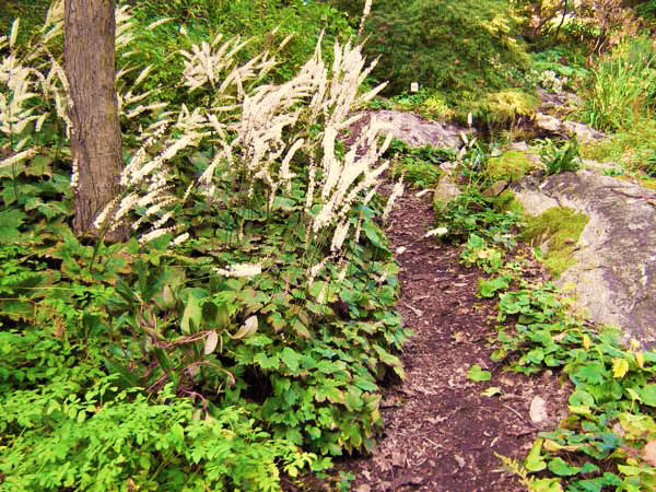 The Woodland Garden Natural Landscaping Gardening and