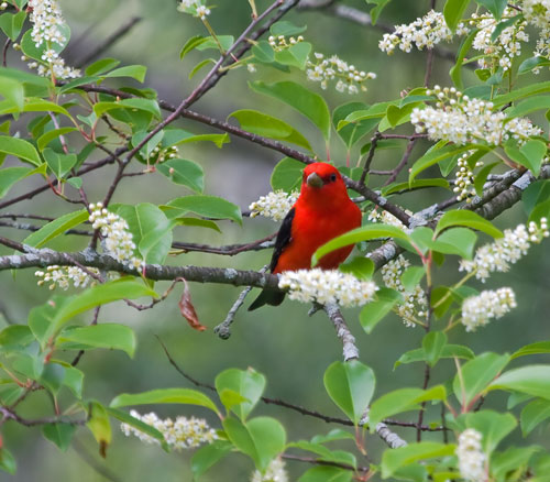 The Bird Garden - Natural Landscaping, Gardening, and ... on Birds Backyard Landscapes id=70044